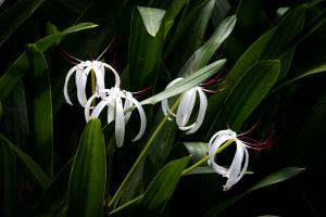 floralADS_8523